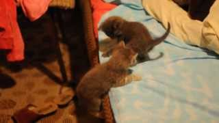 Отдам котят в хорошие руки. Волоколамск 06.05.2013.DSC0136