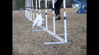 fast agility weave poles 2 77 seconds