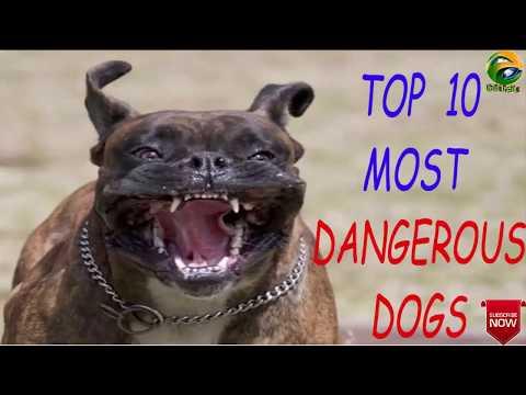 world-top-10-dangerous-dogs-breeds.देखिये-दुनिया-के-दस-खतरनाक-कुत्ते-की-नस्ल।