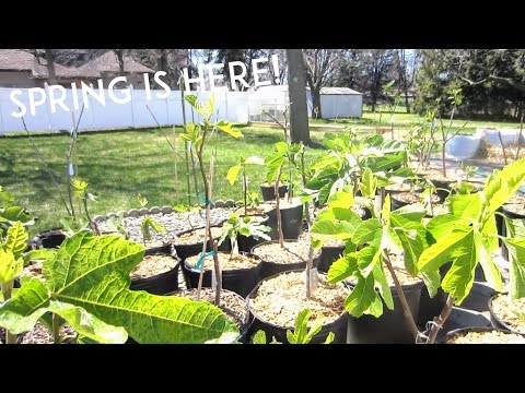 Spring Update: What's going on in the orchard & greenhouse!