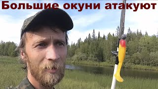 Злые окуни и щуки атакуют Рыбалка в Карелии на спиннинг