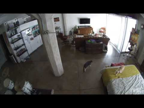 Cat Shuts Up Dog