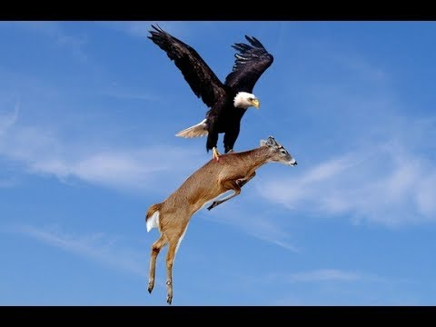 Top 10 best eagle attacks