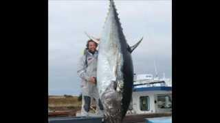 Top 10 Biggest Tuna in the World!!!!!!!(HD)