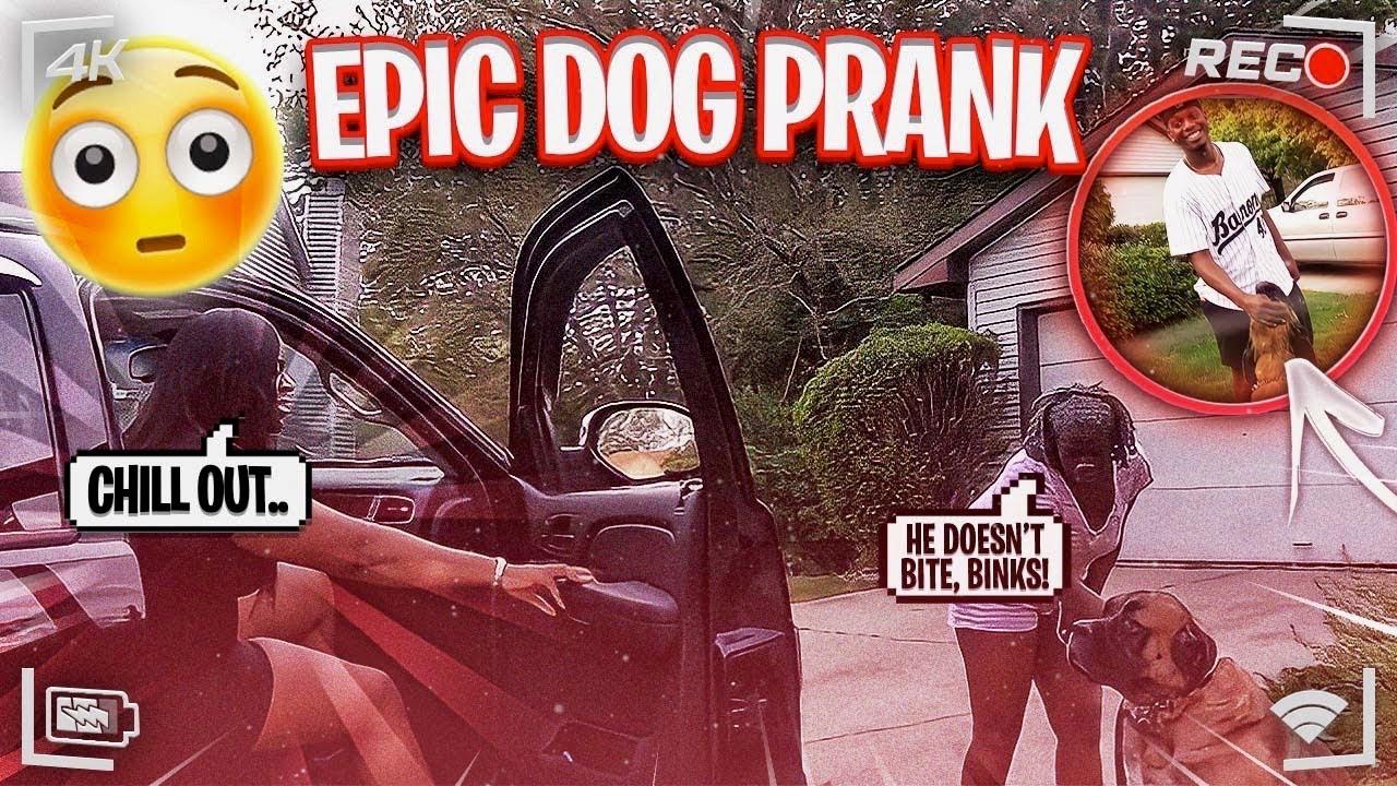 EPIC DOG PRANK ON BINKS