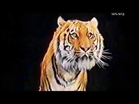 Esso Super Diesel 1989 Vai col tigre