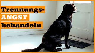 Hund Trennungsangst abgewöhnen I Hunde mit Trennungsangst richtig trainieren