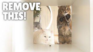 Cats VS Invisible Walls Everywhere!   Kittisaurus