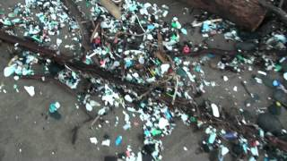 The Plastic Reality at Kahului Harbor! 10/15/2012