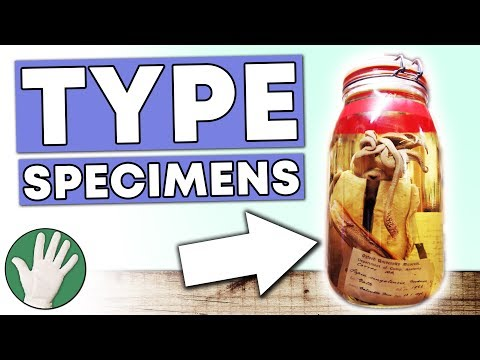 Type Specimens - Objectivity #150