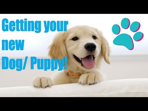 BRINGING YOUR NEW DOG/PUPPY HOME! (EVERYTHING YOU NEED TO KNOW)  -Pet Adventures