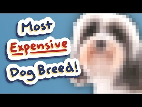 Dog Breeds: 'World's MOST EXPENSIVE!' - ft. Cute Instagram Dogs