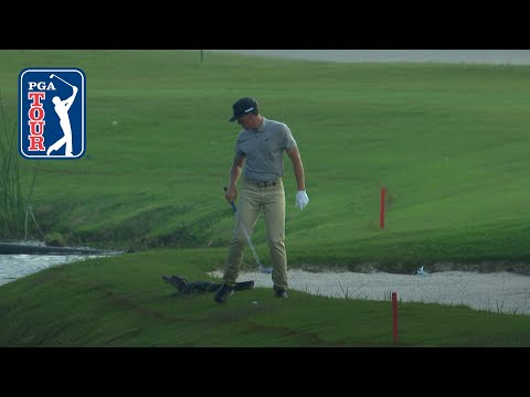 Cameron Champ's approach shot with gator looming at Zurich Classic