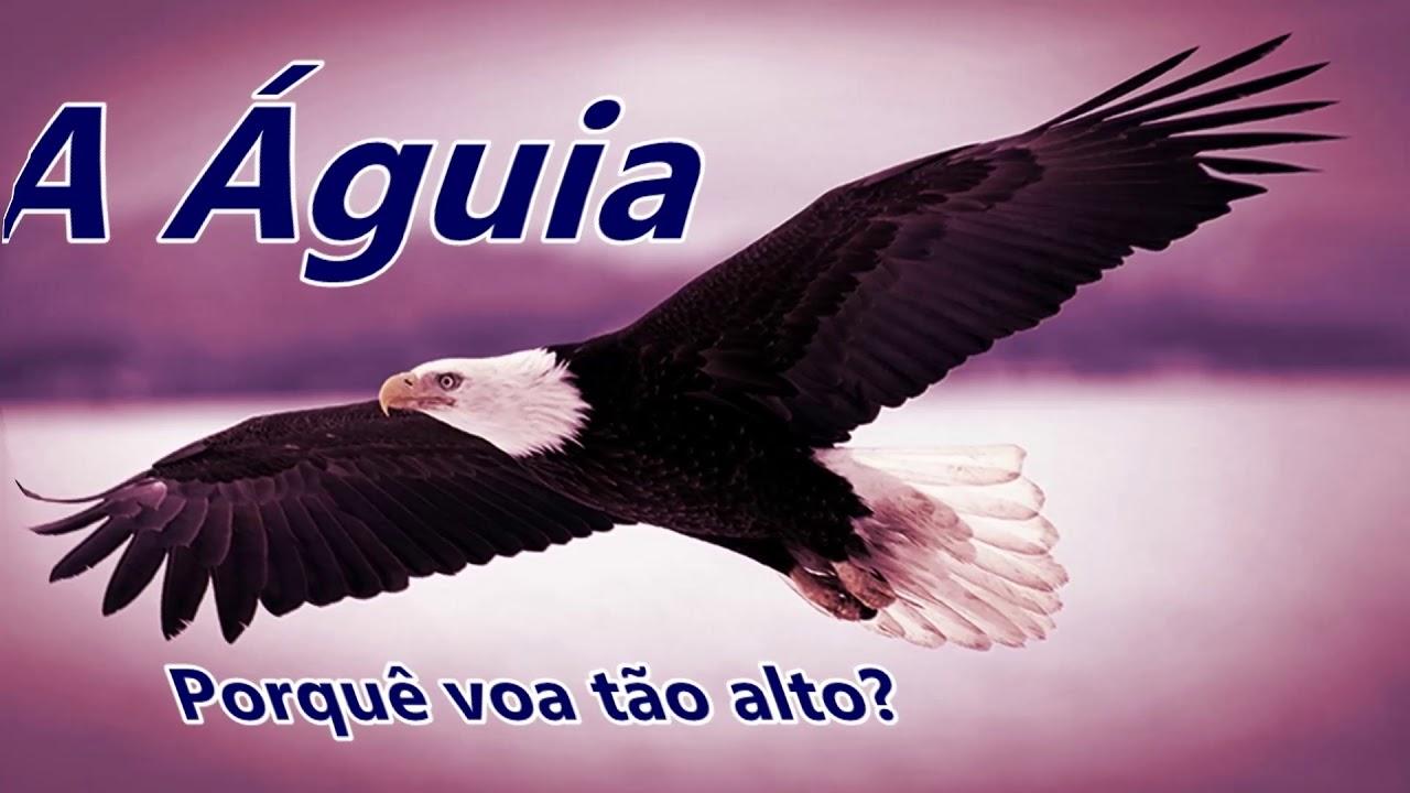 Mensagem A águia