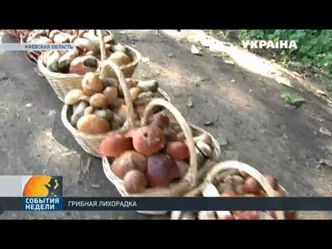 В Украине участились случаи отравления грибами