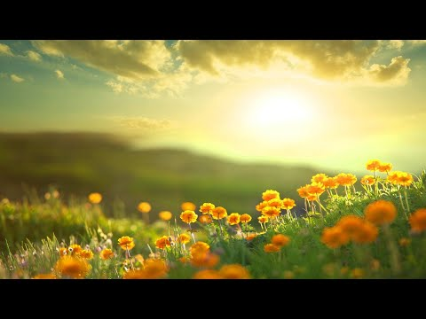 Morning Relaxing Music – Positive Feelings and Energy