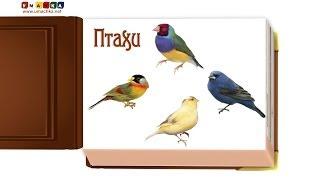 Відео для дітей від 1 року Презентація 'Птахи' (2)