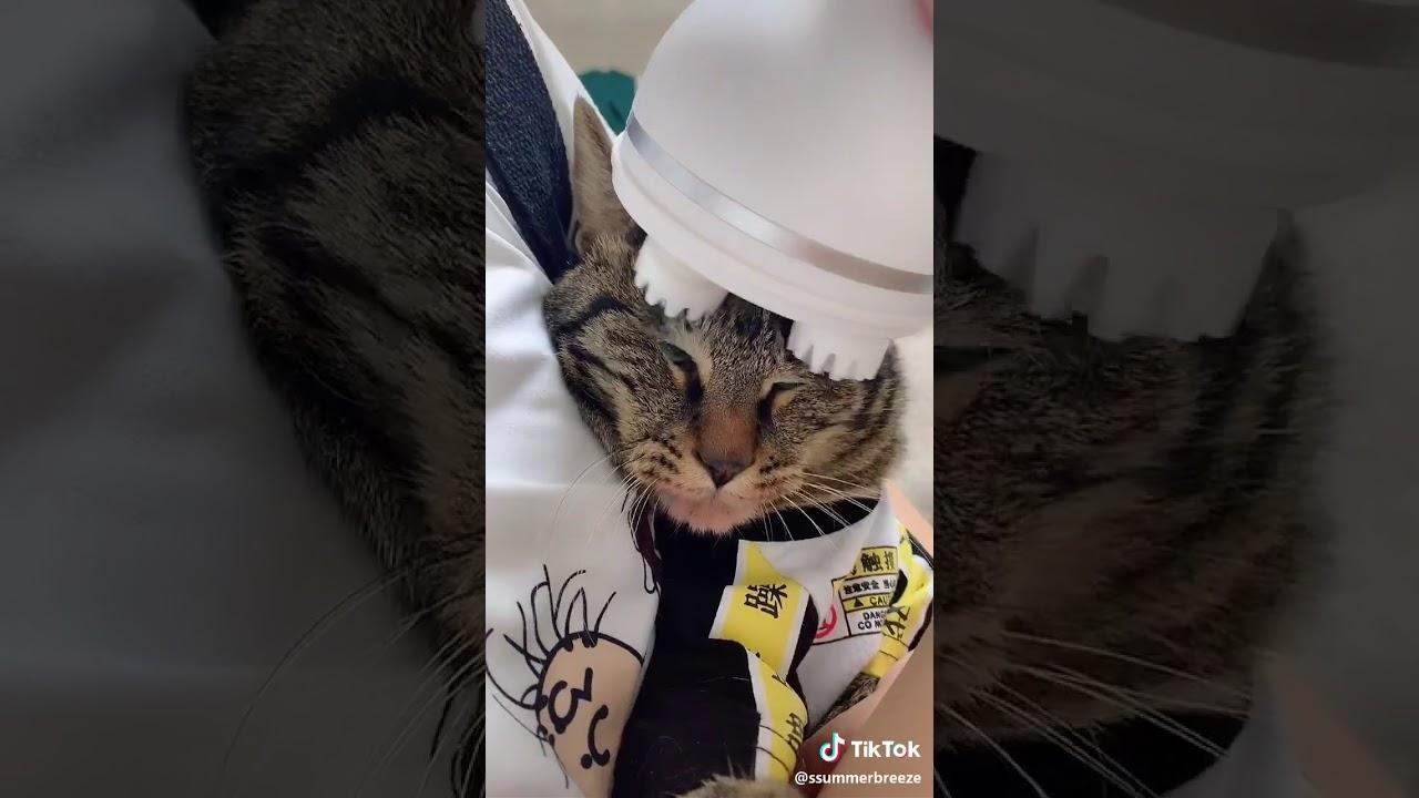Коту массажером голову cassida p 10 вакуумный упаковщик