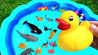 Box of Wild Animals Learn Colors and Learn Animal Names Sharks For Kids