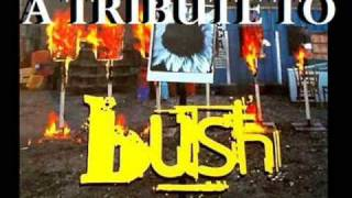 A TRIBUTE TO BUSH!