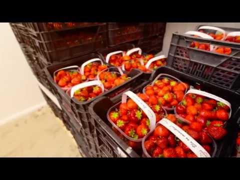 Kuidas jõuavad maasikad poeletile