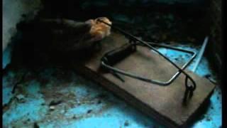 устройство по ловле крыс
