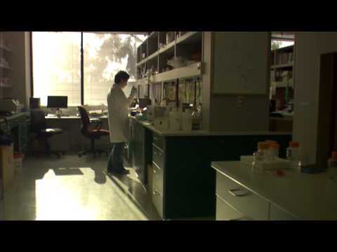 scientist in a lab| Free HD Stock Footage