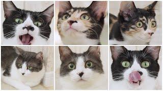 NyankuruTV Vol.13  にゃんくるTV Vol.13 【かわいい猫カフェ/保護猫】【Cute Cat Cafe】