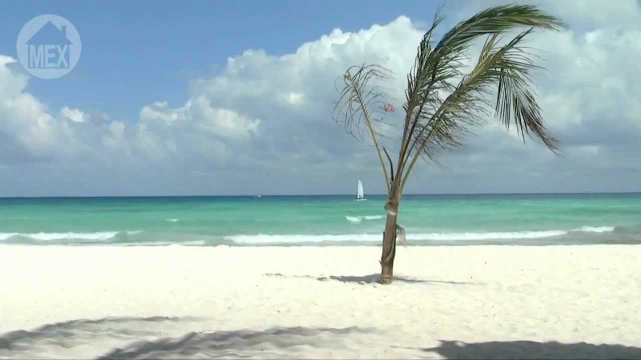 Xcalacoco Beach In Playa Del Carmen A Lonely Palm On Wide Relaxing B 25 Top Beaches