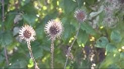 Wissensmix: Was hat eine Pflanze mit Turnschuhen zu tun?
