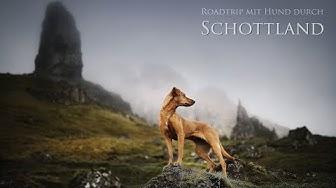 Roadtrip mit Hund durch Schottland / scotland road trip with dog / april 2019