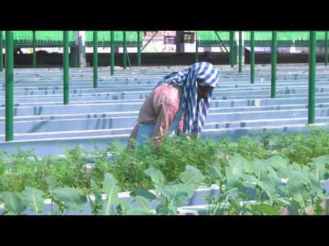 MD's Organic Farm: Farmer Samir Bordoloi