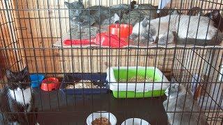 Помогите приюту кормами для кошек Приют для животных Дари добро Новосибирск