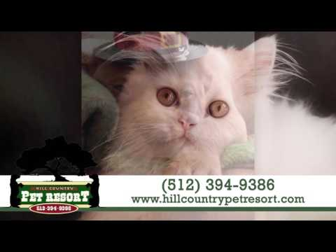 Hill Country Pet Resort   Pet Daycare & Boarding In Austin
