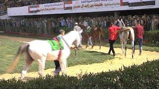 اختتام فعاليات كأس الشيخ خليفة بن زايد آل نهيان بالقاهرة