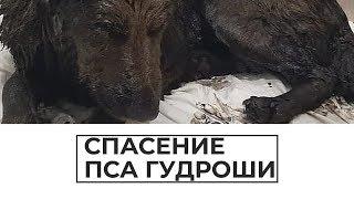 Спасение пса Гудроши