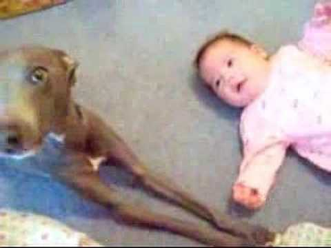 DOG OUT CRIES CRYING BABY