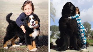 10 Dog Breeds That Are Known For Their Gentle Spirit