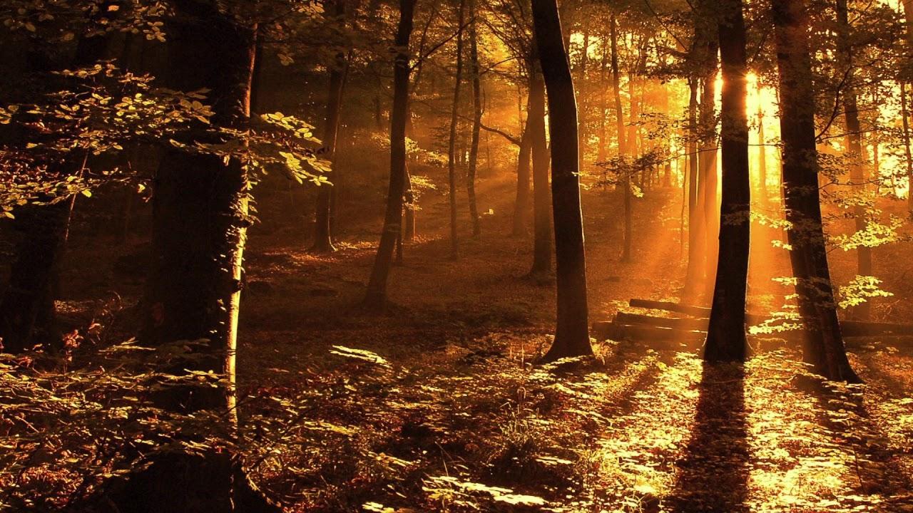 森の中の夕焼け