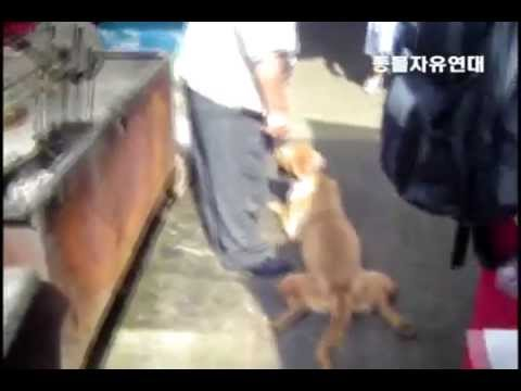 S  Korea's Dog Meat Industry - Road to Death (Anti-Dog Meat Campaign)