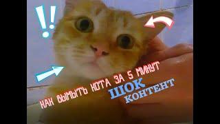Как помыть кота за 5 минут! // Советы, лайфхаки