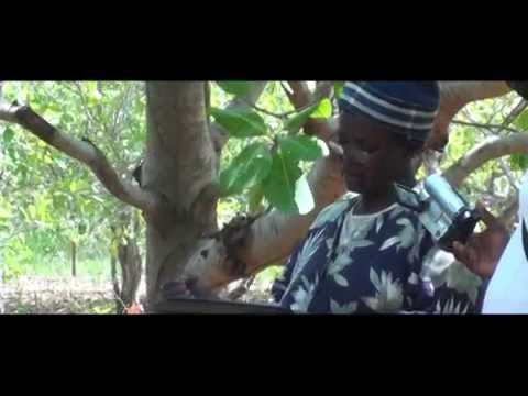 Bunyanso Farms Ltd