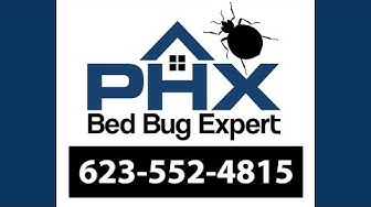 Peoria AZ Bed Bug Exterminator - 623-552-4815 | Bed Bug Treatment