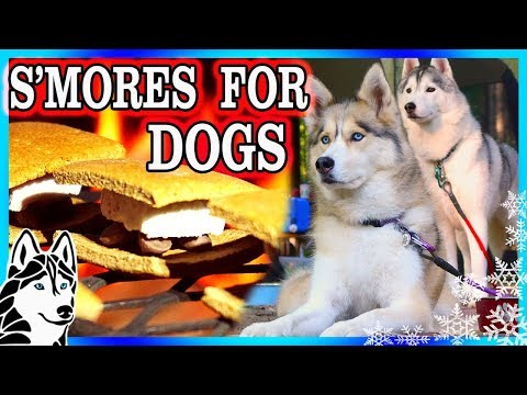 DIY S'MORES FOR DOGS | DIY Dog Treats | Snow Dogs Snacks 81