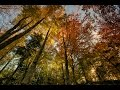 AUTUMN SONG - Canzone d'autunno (Fall song)