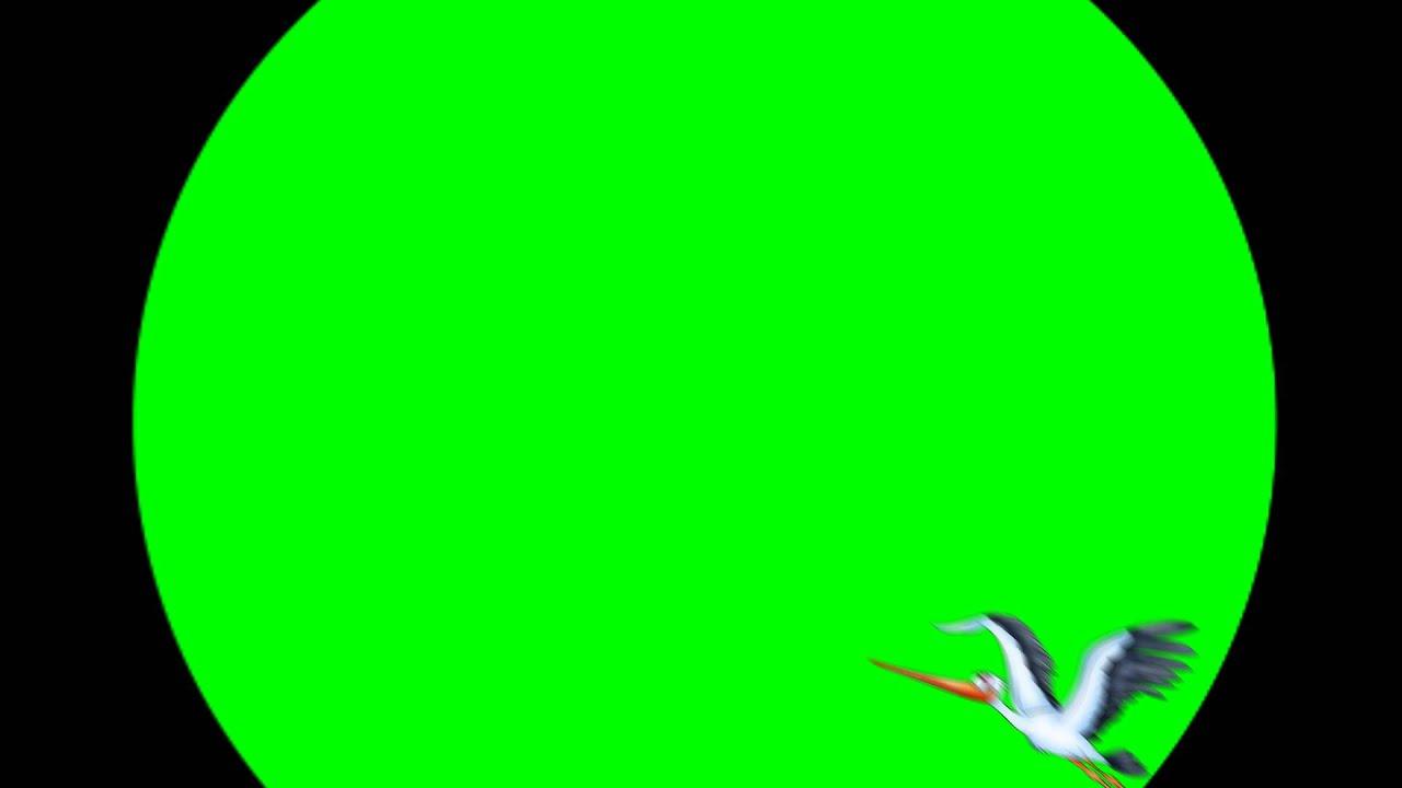 futazh-dlya-videomontazha-aist