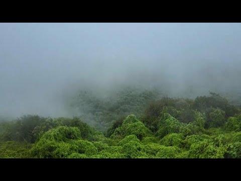 شاهد | مناظر خلابة من السماء لمحمية -حوف- الطبيعية في اليمن  - 15:54-2021 / 10 / 18