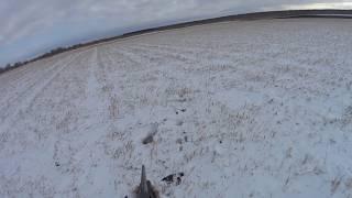 Охота на зайца с Дратхааром 27.10.17 №19