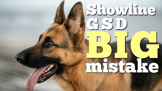 5 things to know before getting a West German Show line German Shepherd