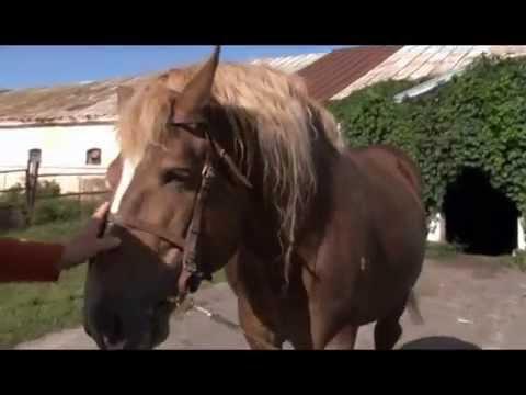 Становление личности в рассказе Астафьева Конь с розовой